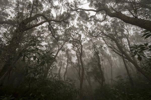 Mist Photograph - Heart Of Darkness by Karsten Wrobel
