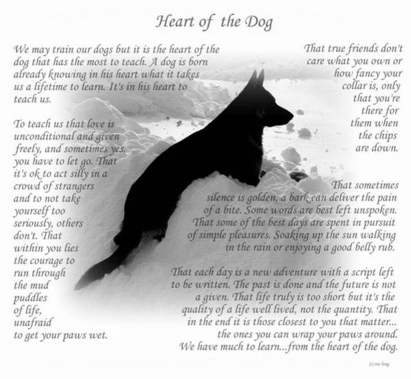 Wall Art - Photograph - Heart Of The Dog Version Two by Sue Long