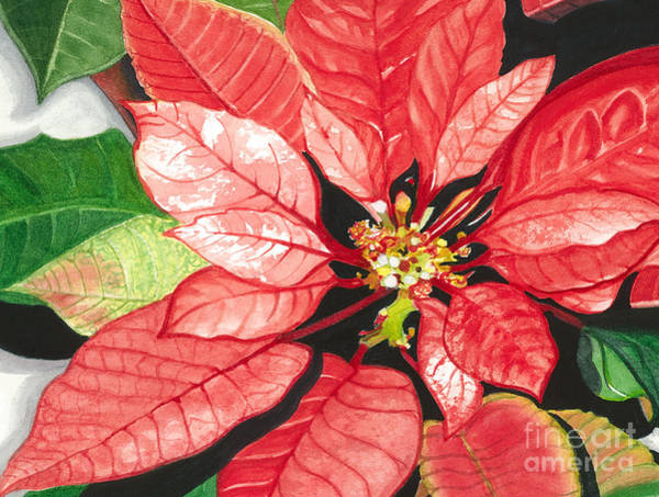 Wall Art - Painting - Poinsettia, Star Of Bethlehem No. 2 by Barbara Jewell