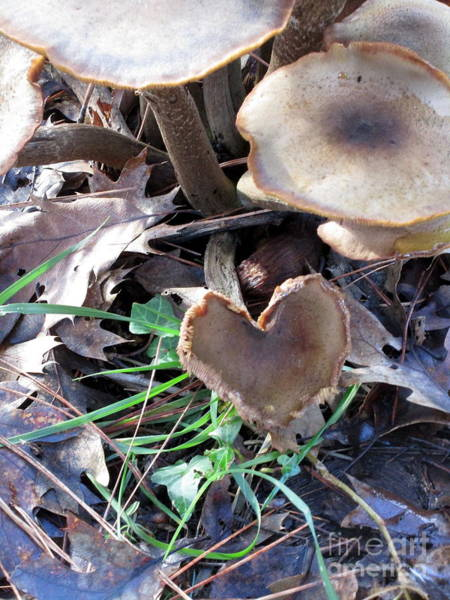 Photograph - Heart Of The Matter Mushroom Style by Marie Neder