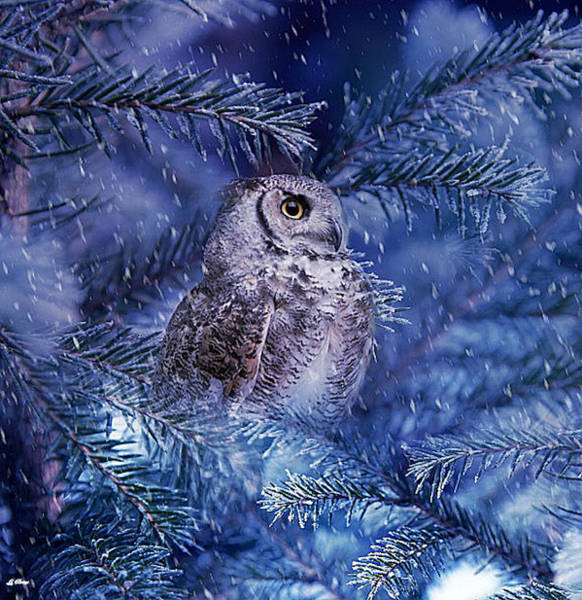 Barn Owl Mixed Media - Heart Of Winter by G Berry