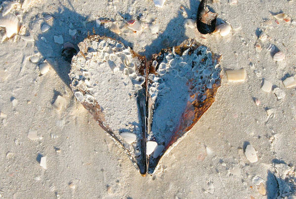 Photograph - Heart On The Beach by Mike Evangelist