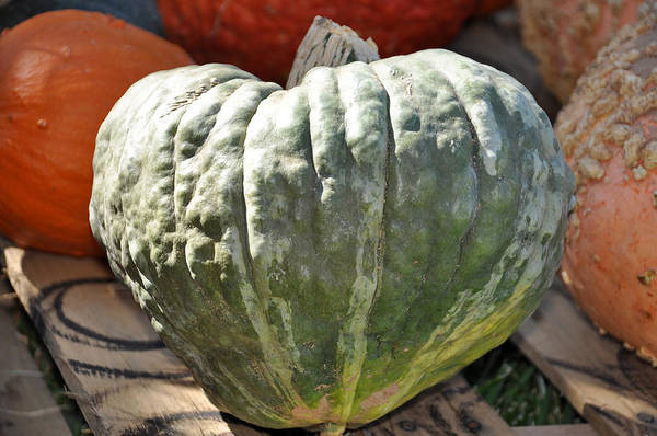 Photograph - Heart Pumpkin by Teresa Blanton