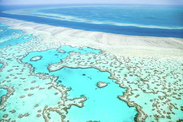 Qld Photograph - Heart Reef by Az Jackson