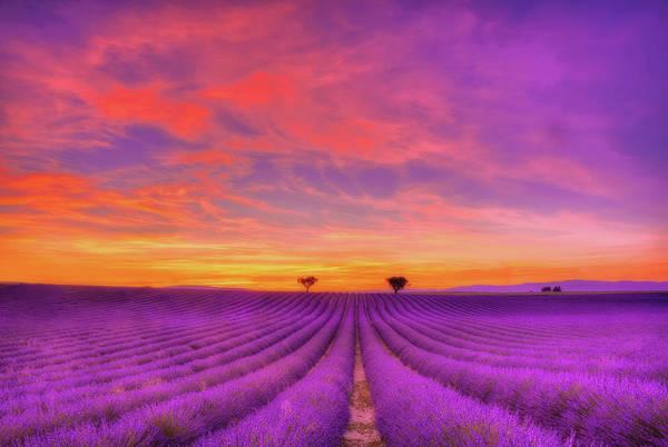 Lavender Field Wall Art - Photograph - Heart To Heart by Midori Chan