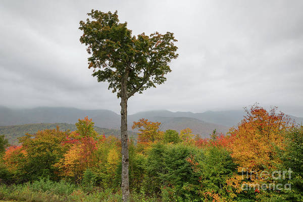 Photograph - Heart Tree - Kancamagus Highway, New Hampshire by Erin Paul Donovan