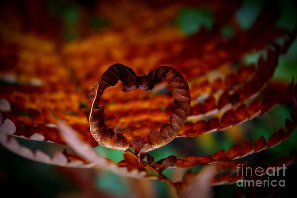 Wall Art - Photograph - Heart United by Hanni Stoklosa
