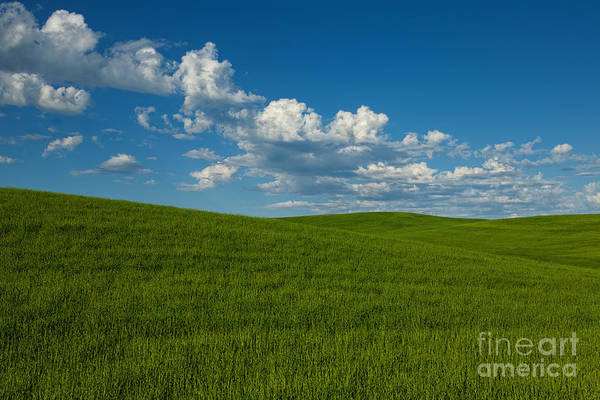 Photograph - Heartbeat Of America - The Palouse by Beve Brown-Clark Photography