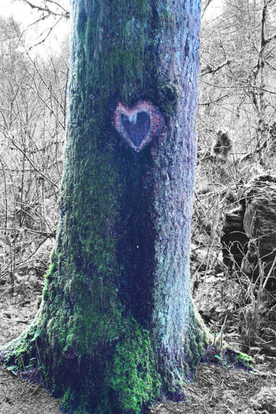 Wall Art - Photograph - Heartwood by Angi Parks