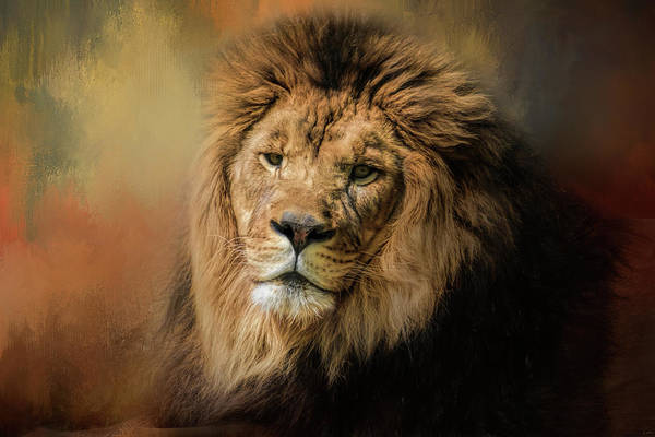 Photograph - Heat Wave Lion Art By Jai Johnson by Jai Johnson