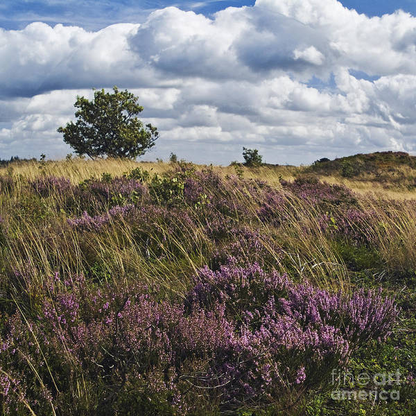 Wall Art - Photograph - Heath Of Jutland by Wedigo Ferchland