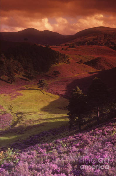 Photograph - Heather Hills by Phil Banks