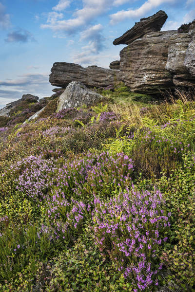 Northumbria Photograph - Heather On Dove Crag by David Taylor