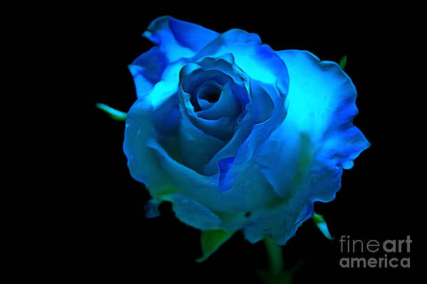 Rose Bud Photograph - Heavenly Blues by Krissy Katsimbras