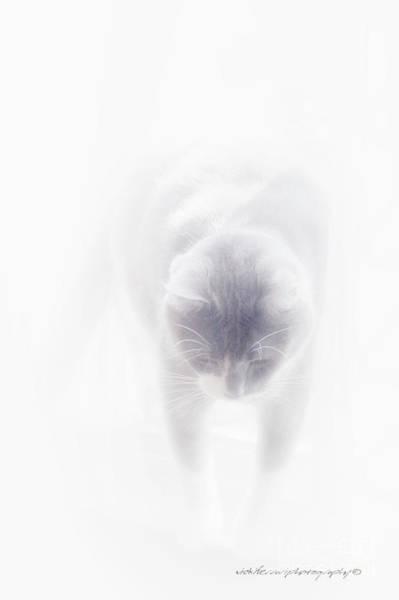Photograph - Heavenly Cat by Vicki Ferrari