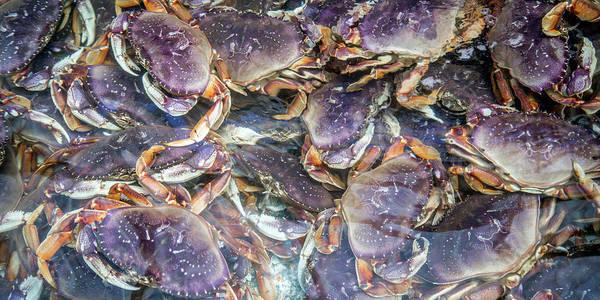 Wall Art - Photograph - Heavenly Crabs by Betsy Knapp