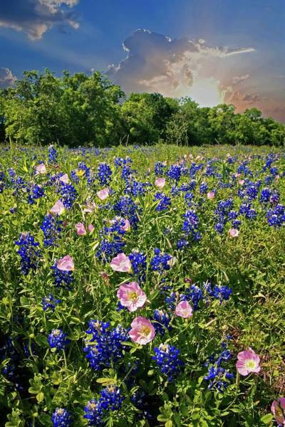 Photograph - Heavenly Hues In The Hill Country by Lynn Bauer