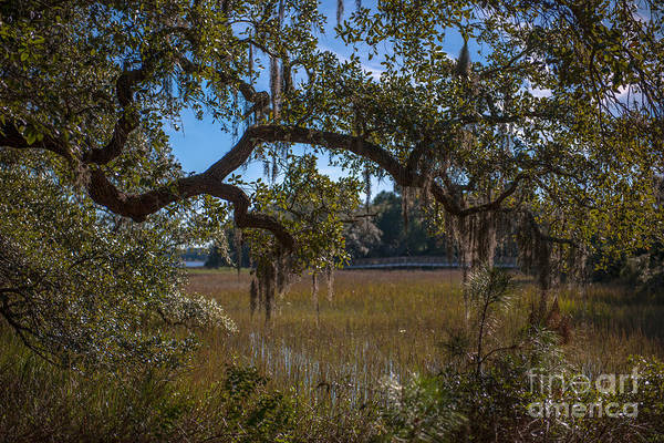 Photograph - Heavenly Marsh View On Daniel Island by Dale Powell