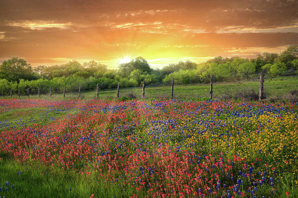 Photograph - Heaven's Light In The Hill Country by Lynn Bauer