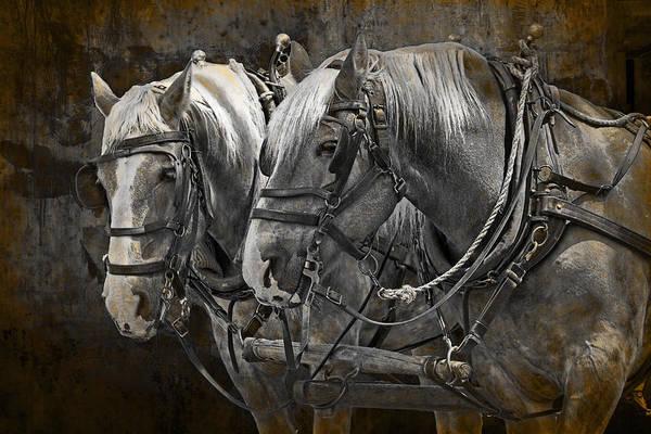 Photograph - Heavy Horses by Randall Nyhof