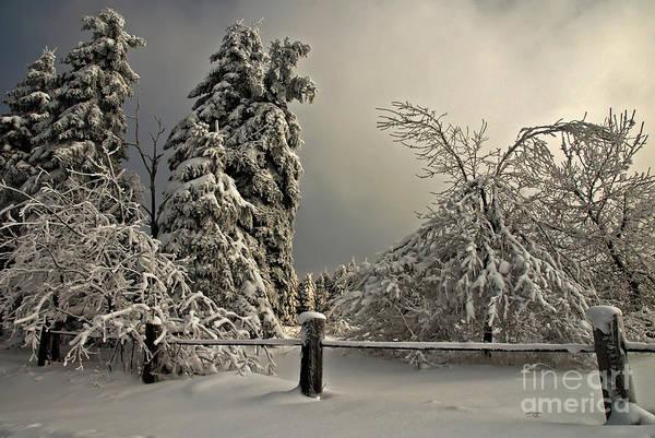 Highland Light Photograph - Heavy Laden by Lois Bryan