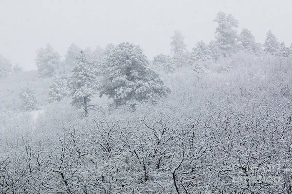 Wall Art - Photograph - Heavy Snow In The Pike National Forest Of Colorado by Steve Krull