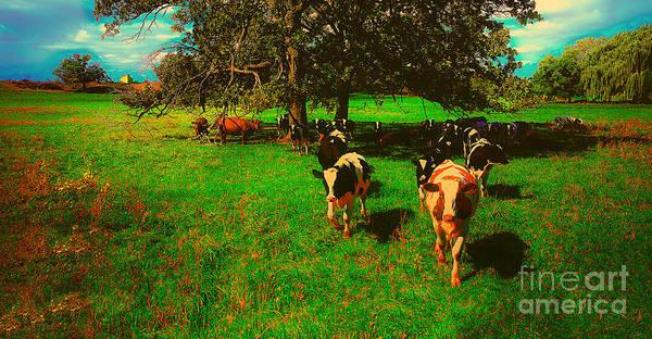 Photograph - Hebron Il Cows Pasture by Tom Jelen