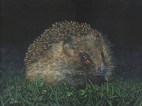 Painting - Hedgehog by John Neeve