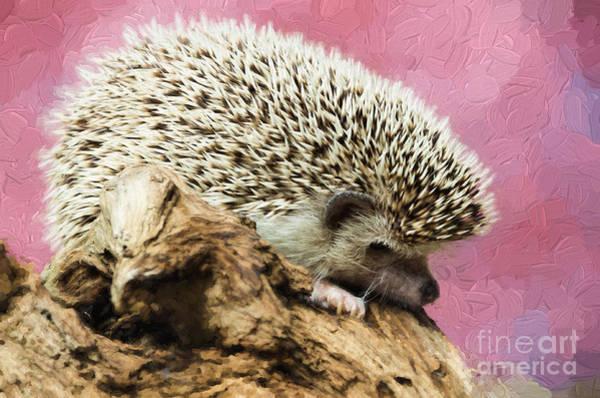 Photograph - Hedgehog by Les Palenik