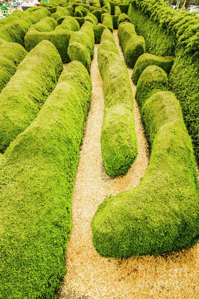 Botanical Gardens Photograph - Hedging An Escape by Jorgo Photography - Wall Art Gallery