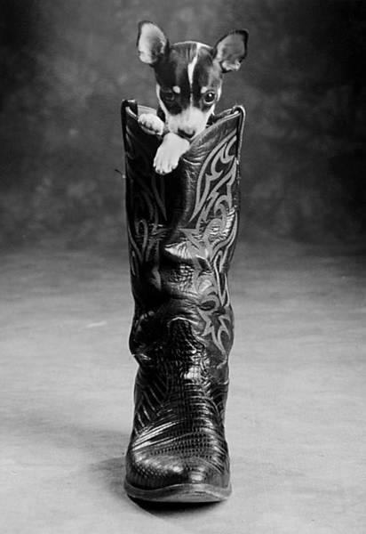 Photograph - Heeler by Jill Reger