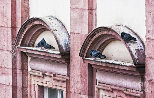 Photograph - Heidelberg Pigeons by Tatiana Travelways