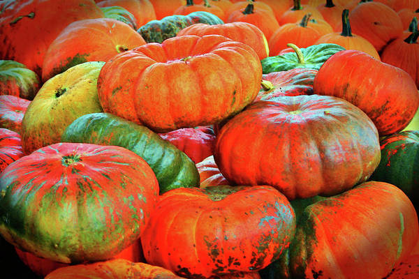 Photograph - Heirloom Pumpkins by Cynthia Guinn