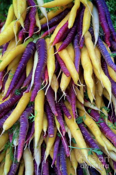 Purple Carrot Photograph - Heirloom Rainbow Carrots by Bruce Block