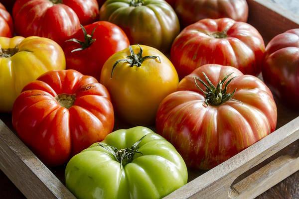 Photograph - Heirloom Tomato Harvest by Teri Virbickis