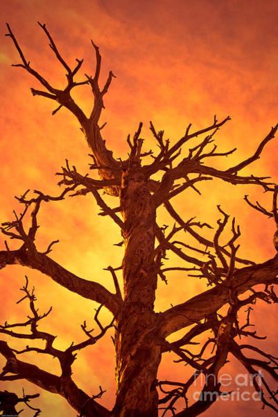 Brimstone Photograph - Hell by Charles Dobbs
