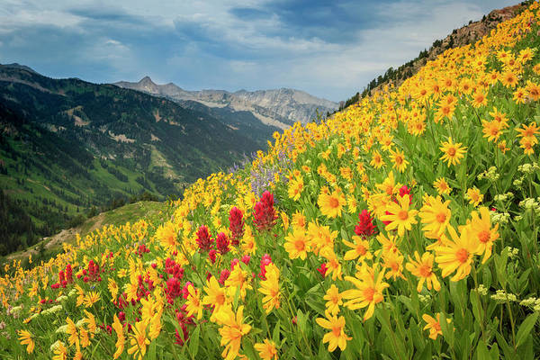 Photograph - Hellgate Wildflowers by Johnny Adolphson