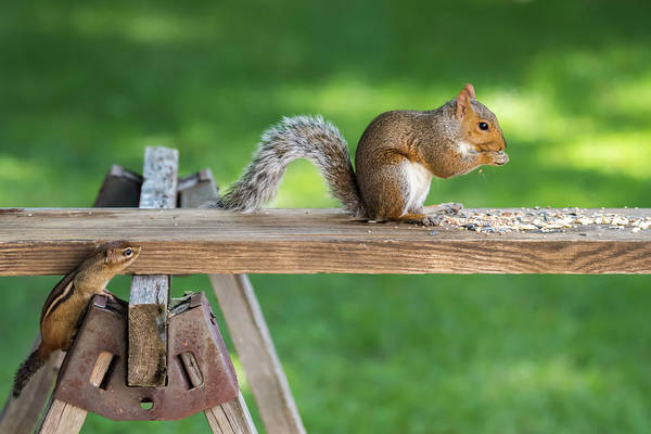 Photograph - Hello Are You Gonna Eat All That? Chipmunk And Squirrel by Terry DeLuco