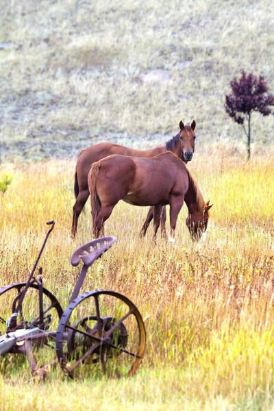 Plow Horses Photograph - Hello by Naman Imagery