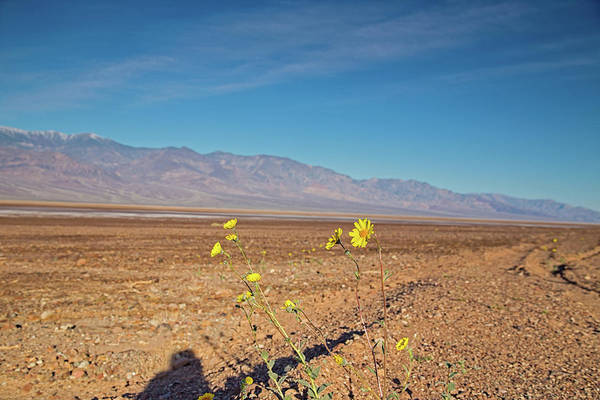 Death Valley Np Photograph - Hello Desert Gold by Kunal Mehra