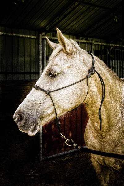 Palomino Photograph - Hello Dolly by Linda Unger