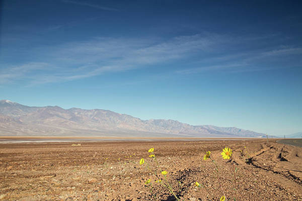 Death Valley Np Photograph - Hello Geraea Canescens by Kunal Mehra