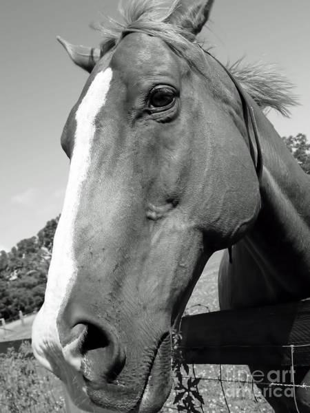 Photograph - Hello Horse by D Hackett