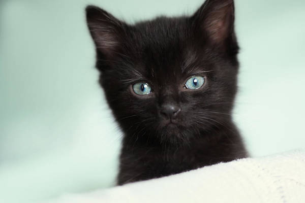 Black Cats Photograph - Hello Kitty by Amy Tyler