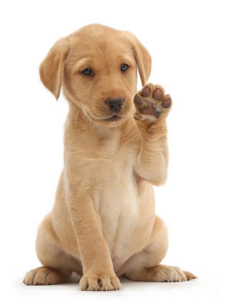 Photograph - Hello Puppy by Warren Photographic
