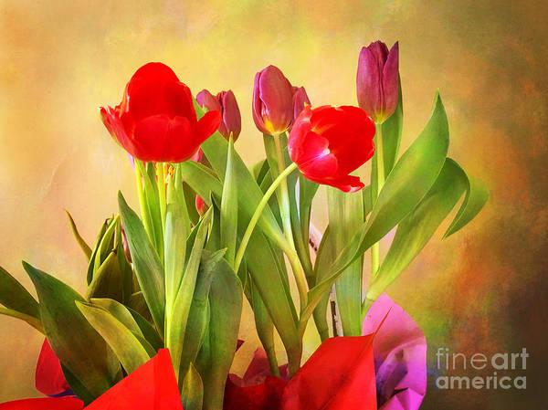 Photograph - Hello Spring by Eleanor Abramson