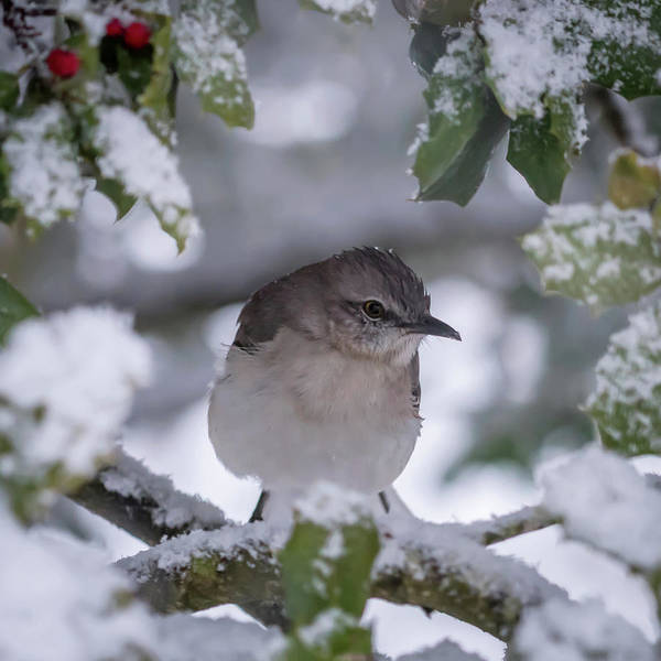 Photograph - Hello Spring? Mockingbird Square by Terry DeLuco
