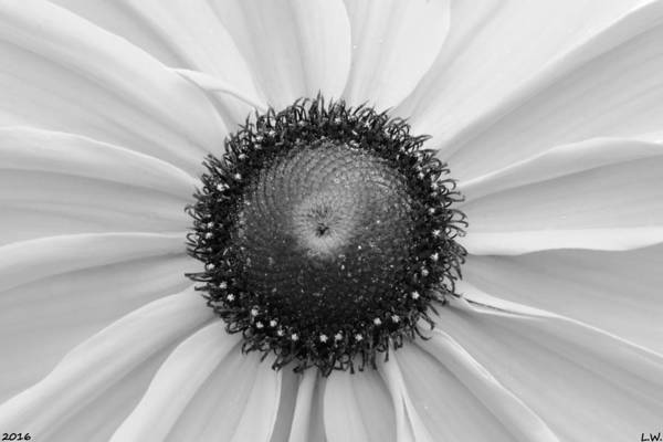 Photograph - Hello Sunshine Black And White by Lisa Wooten