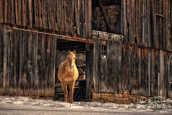 Palomino Photograph - Hello Sweetheart by Lois Bryan