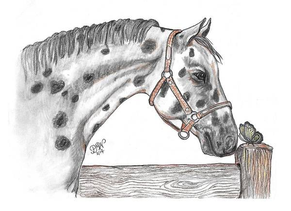 Appaloosa Drawing - Hello There by Patricia Wilt